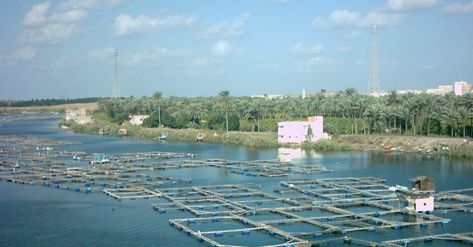 Egypt tilapia cages