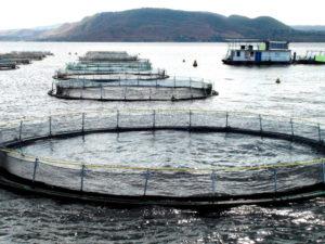 tilapia aquaculture Africa