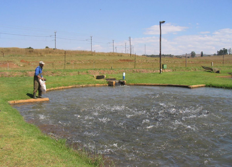 South Africa trout farm strategic environmental assessment