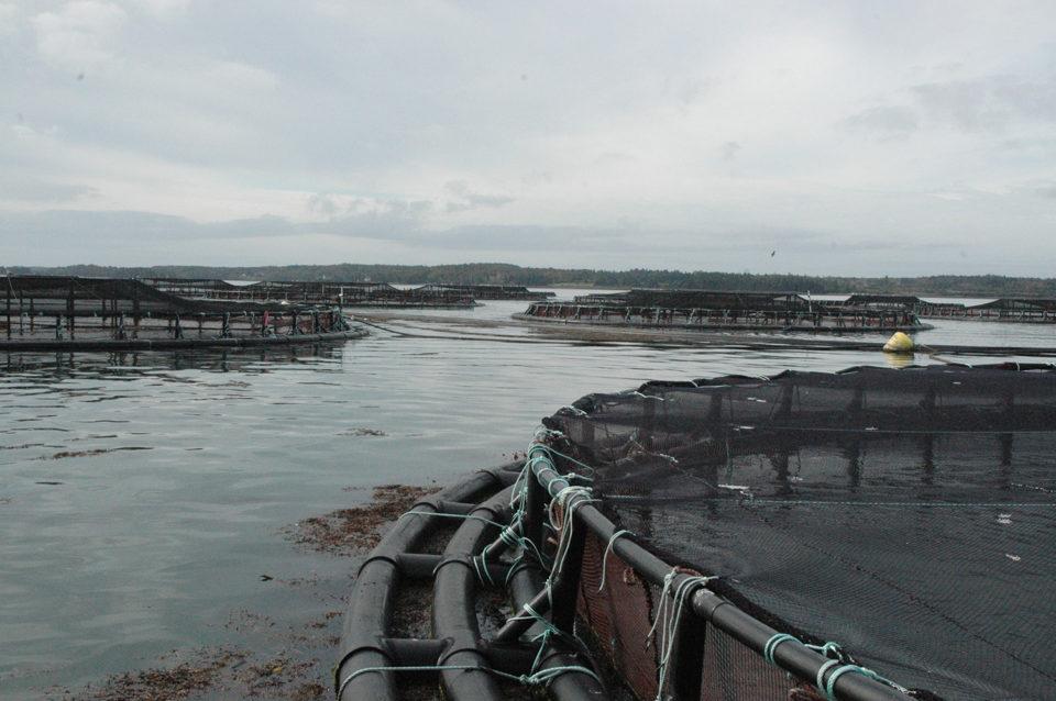 ocean hot spots aquaculture potential