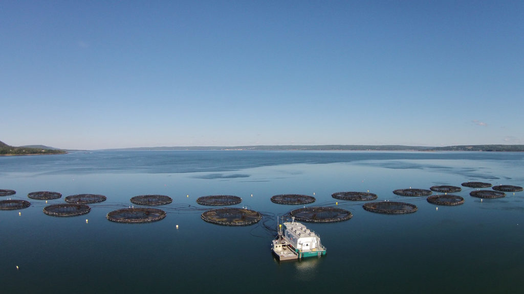 Article image for Warming oceans prompt adaptation efforts for aquaculture