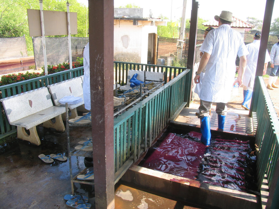 shrimp biosecurity