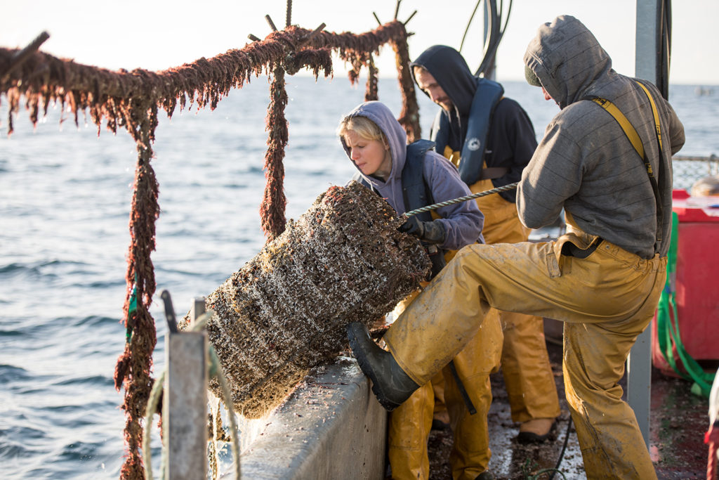 Article image for UK lobster-farming project breaks new ground