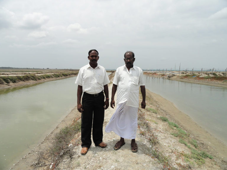 Article image for Improving shrimp farm design in flood-prone areas of India