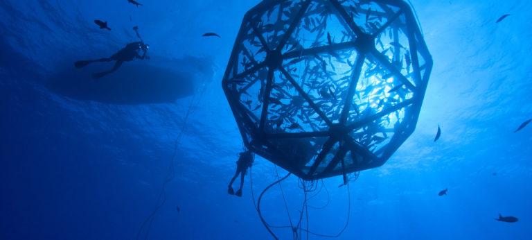 offshore aquaculture