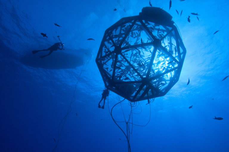 Article image for Opinion: Stop offshoring offshore aquaculture