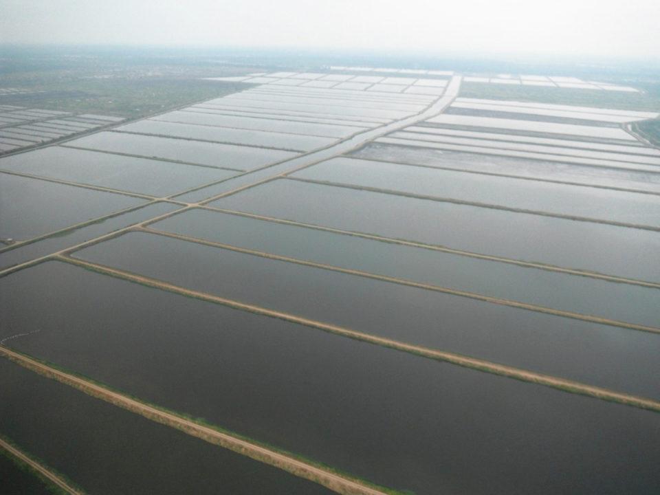 Retrofitting shrimp farms to recirculating systems « Global