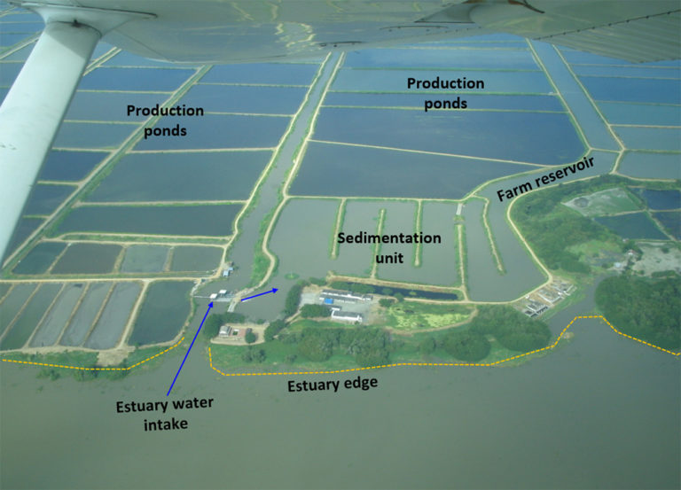 Article image for Retrofitting shrimp farms to recirculating systems