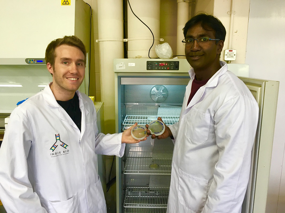 Article image for Microalgae into medicine: Biotech startup targets shrimp, salmon diseases