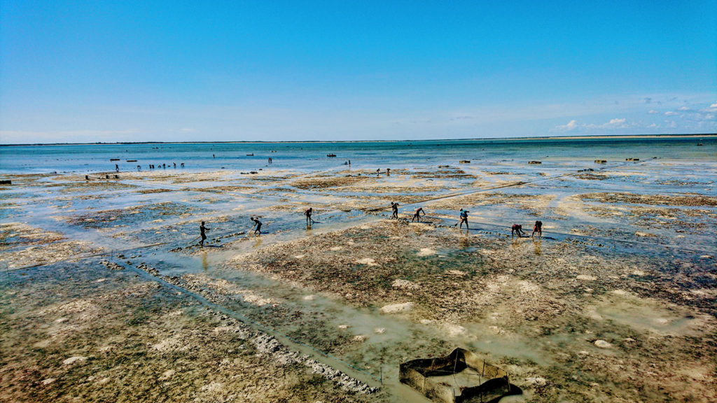 Article image for Sea cucumber project redefining traditional farming in Madagascar