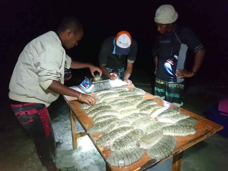 Article image for Proyecto de pepino de mar esta redefiniendo la agricultura tradicional en Madagascar