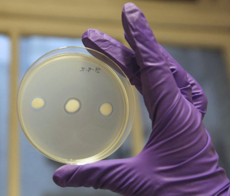 Article image for Scottish firm honing bacteriophages into aquaculture-disease assassins