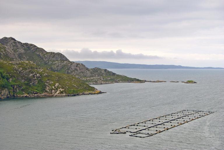 Article image for El sector de salmón de Escocia aguanta las luchas contra los piojos de mar y la mortalidad