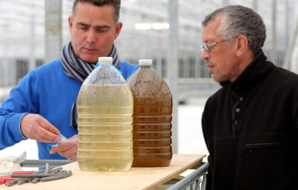 Article image for Algae innovators aim to freeze out early-stage shrimp losses