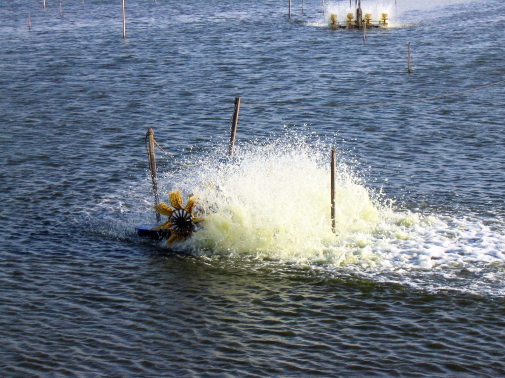 Article image for Pond aeration and aerators: Second thoughts