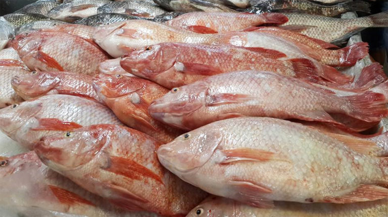 Article image for Evaluating effects of organic acids in Nile tilapia feed