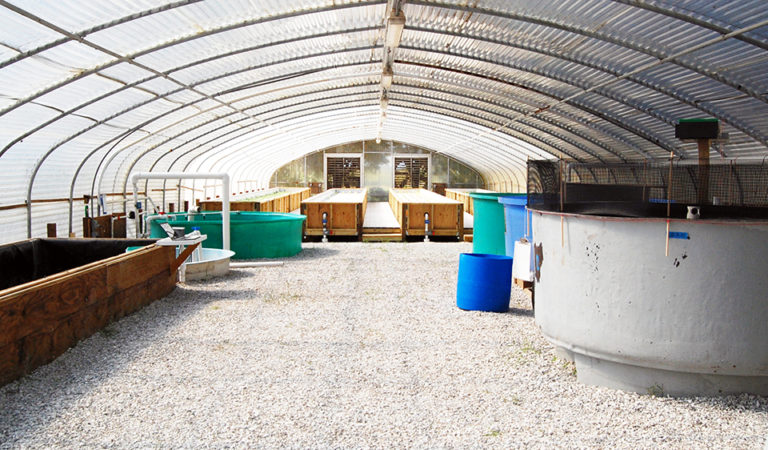 Article image for Aquaponic system produces red drum, saltwater vegetable species