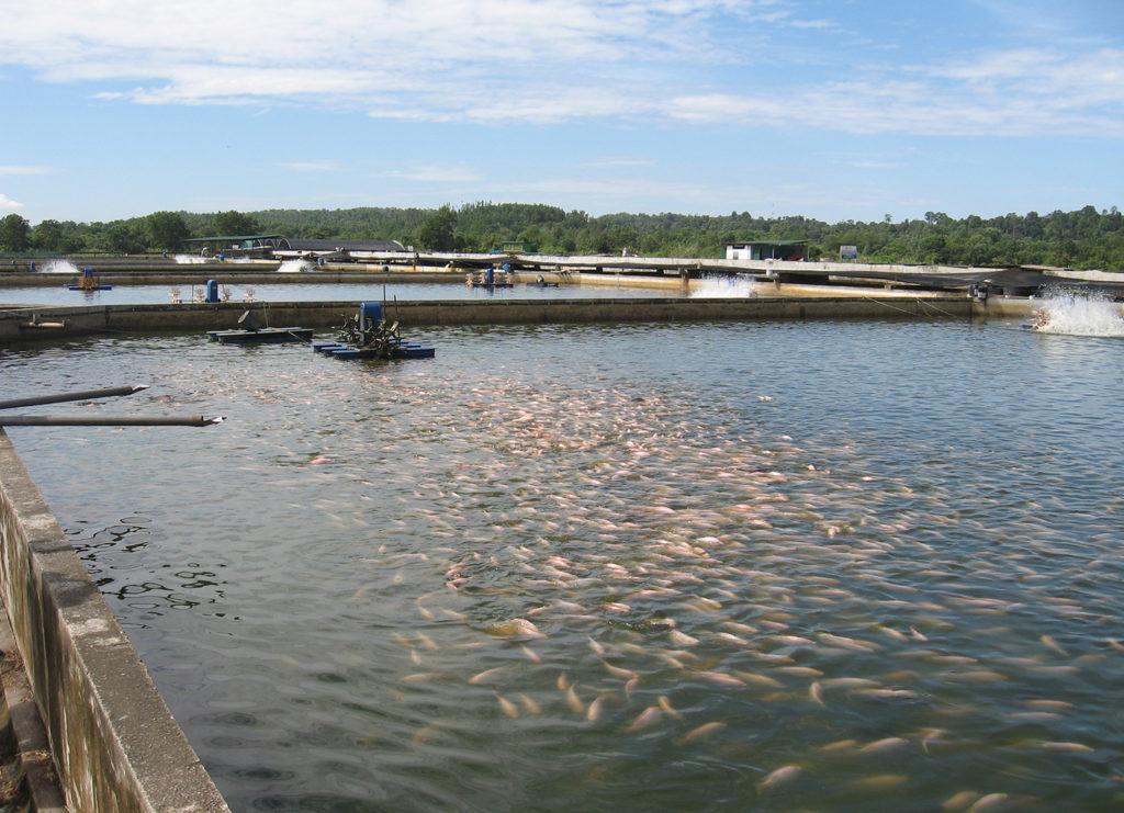 Article image for La acuacultura es clave para aumentar los suministros de productos del mar a los Estados Árabes