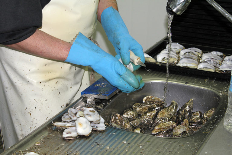 Article image for Human enteric viruses in shellfish, part 2