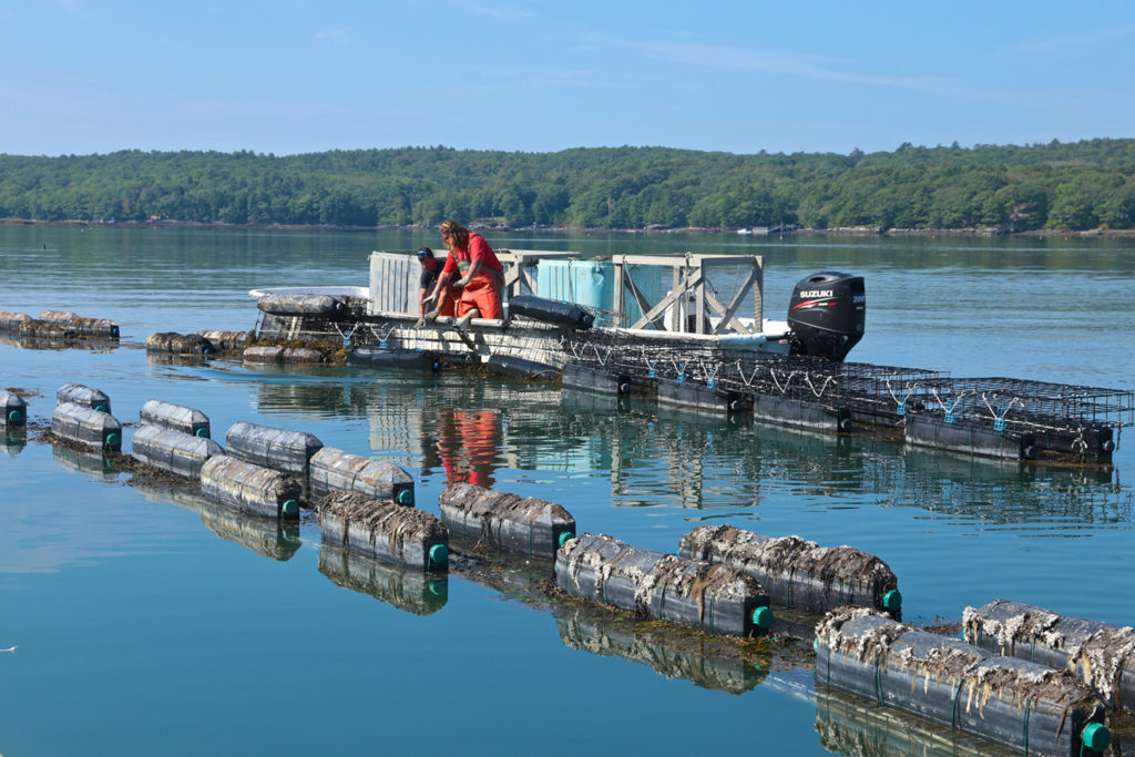 Article image for Maine oyster farmer stares down climate change, learns to adapt
