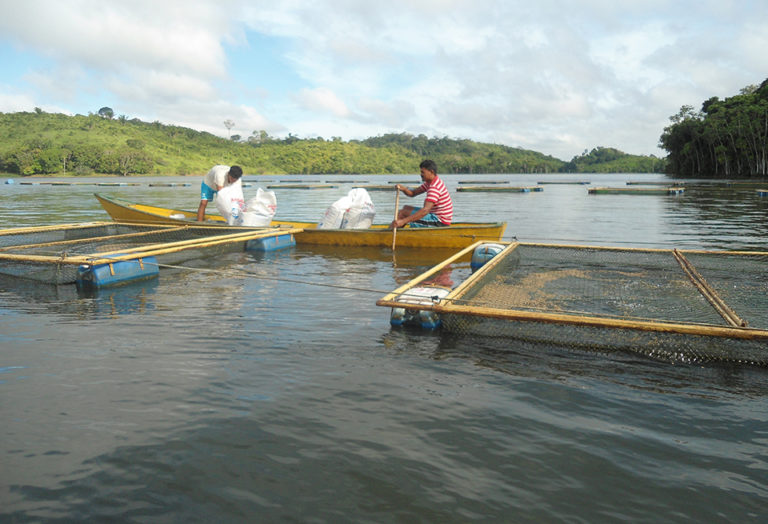 Article image for Aquaculture planning, development in Brazilian federal waters
