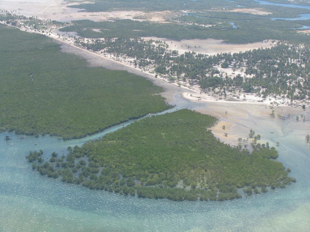 Article image for ¿Qué es la biodiversidad y su relevancia para la certificación acuícola?