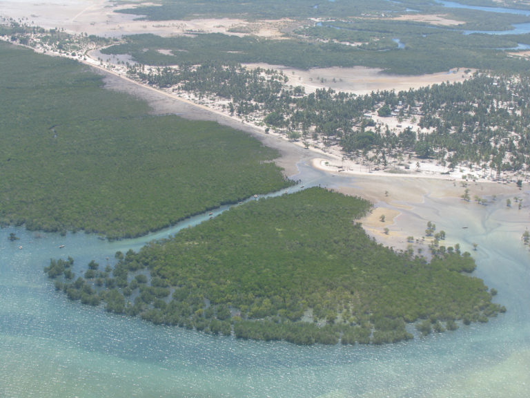 Article image for What is biodiversity and its relevance to aquaculture certification?