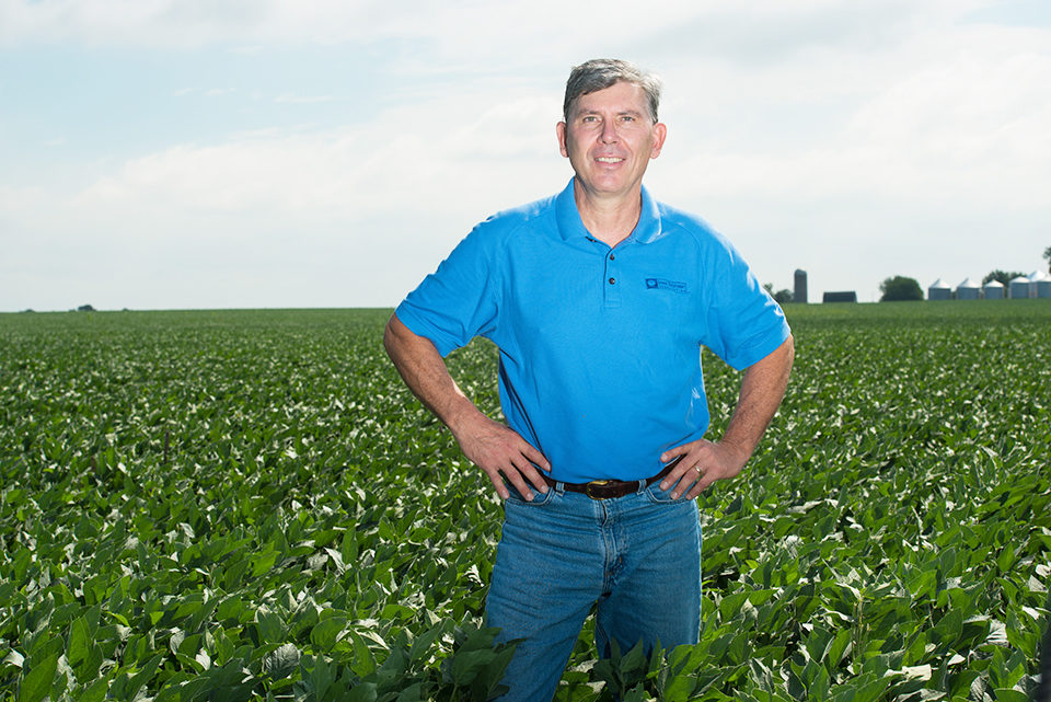 Modified soybeans