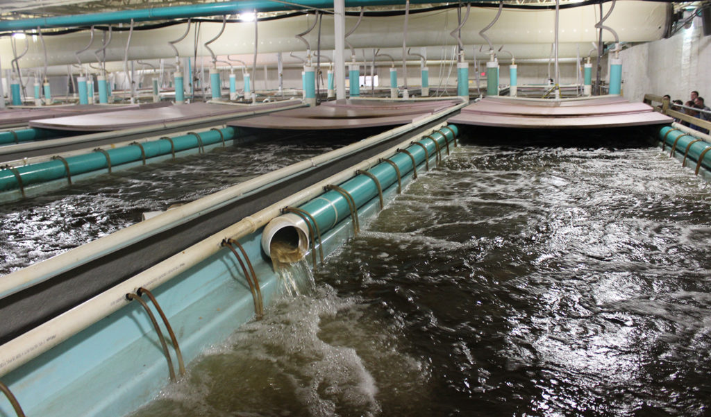 Article image for What to do with empty big box stores? Turn them into fish farms