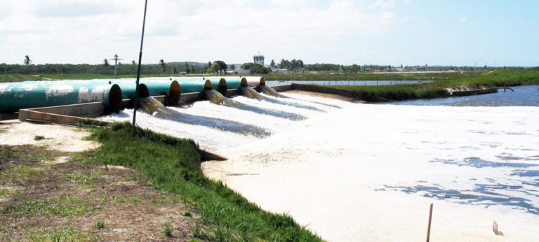 Article image for Common-sense biosecurity measures head off crop failures