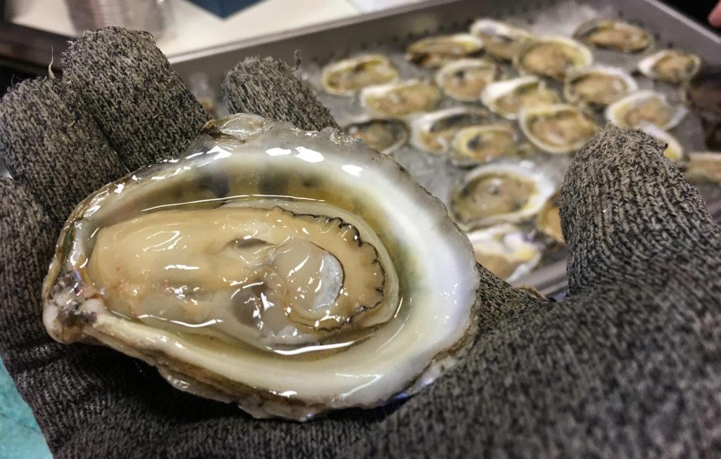 Article image for Preparando un plan para el cultivo de ostras en Florida