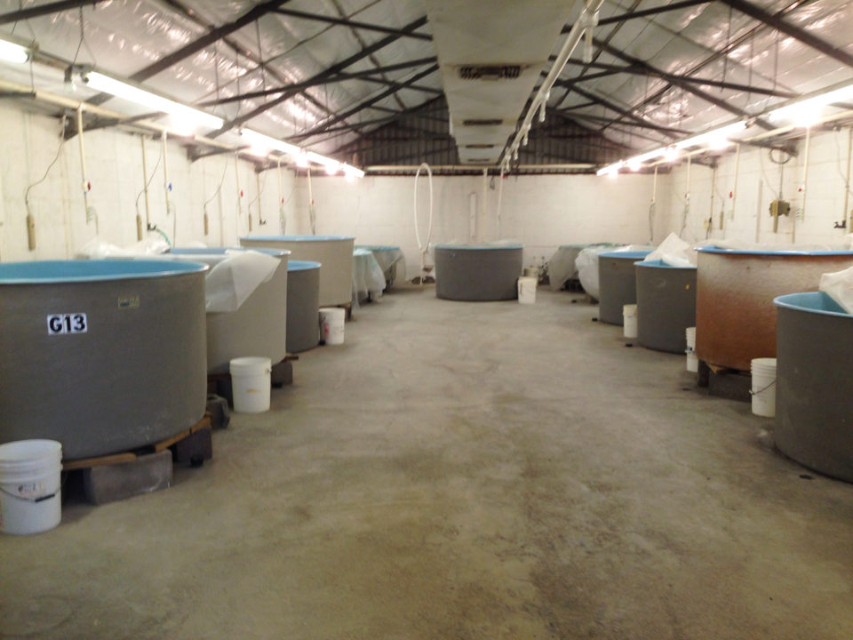 Aquaculture Pathology Laboratory