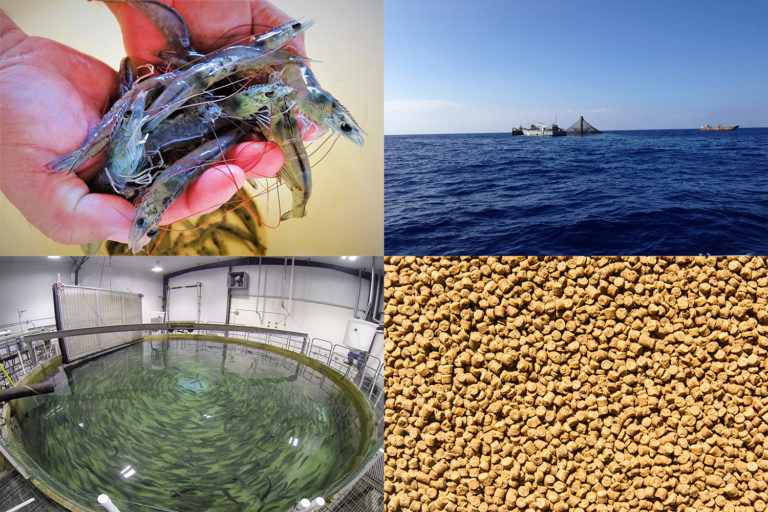 Article image for Aquaculture is winning, Rabobank analyst explains
