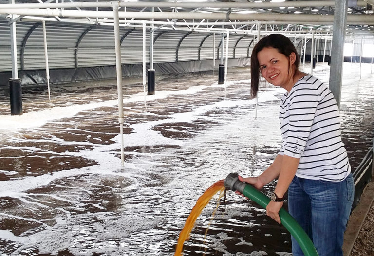 Article image for Multi-phase shrimp production in sun-driven Honduran ponds