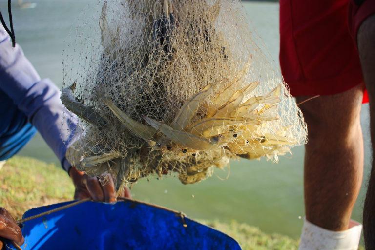 Article image for Brazilian shrimp farmers eye new horizons