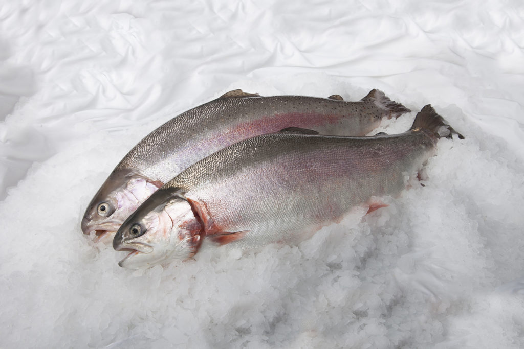 Article image for Developments in closed-containment technologies for salmonids, part 1