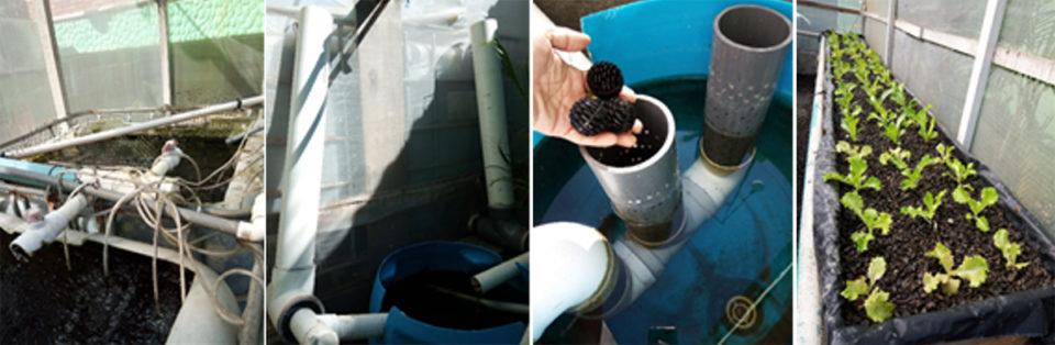 experimental aquaponics