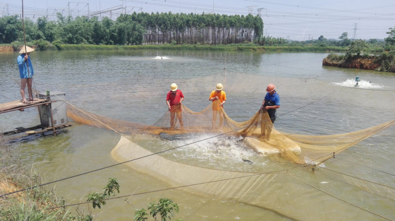 Article image for Bio-economic modeling for improving aquaculture performance