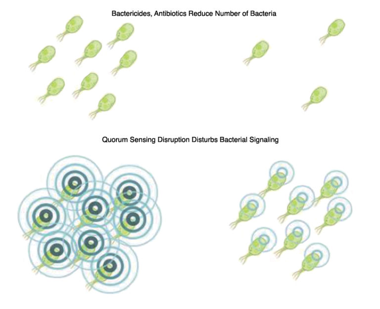 Article image for Feed additives based on quorum sensing disruption could aid fight against EMS