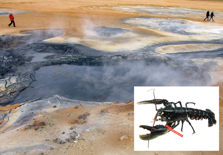 Article image for Pilot lobster production facility in Iceland used geothermal groundwater