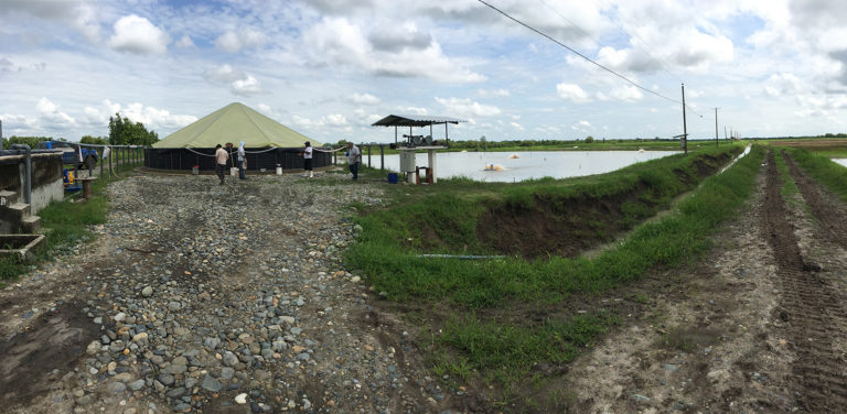 Article image for Ongoing production issues in shrimp farming, part 2