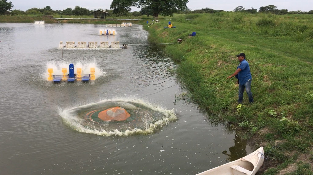 Article image for Ongoing production issues in shrimp farming, part 1