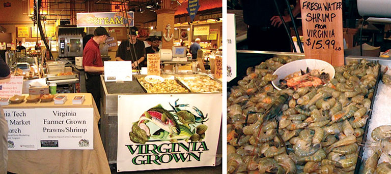 Market test: Farm-grown freshwater prawns « Global Aquaculture Advocate