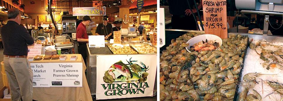 Article image for Market test: Farm-grown freshwater prawns