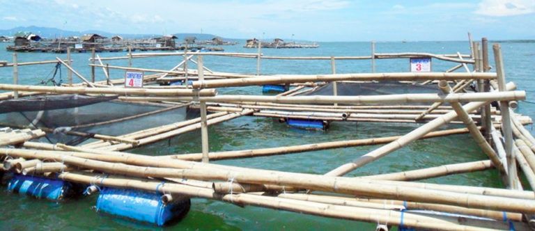 Article image for Low volume, high density: Milkfish demonstration project