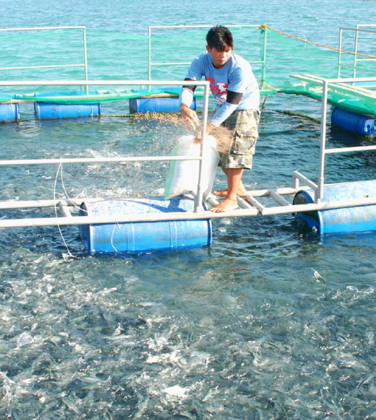Article image for Strategies for reducing feed costs in small-scale aquaculture