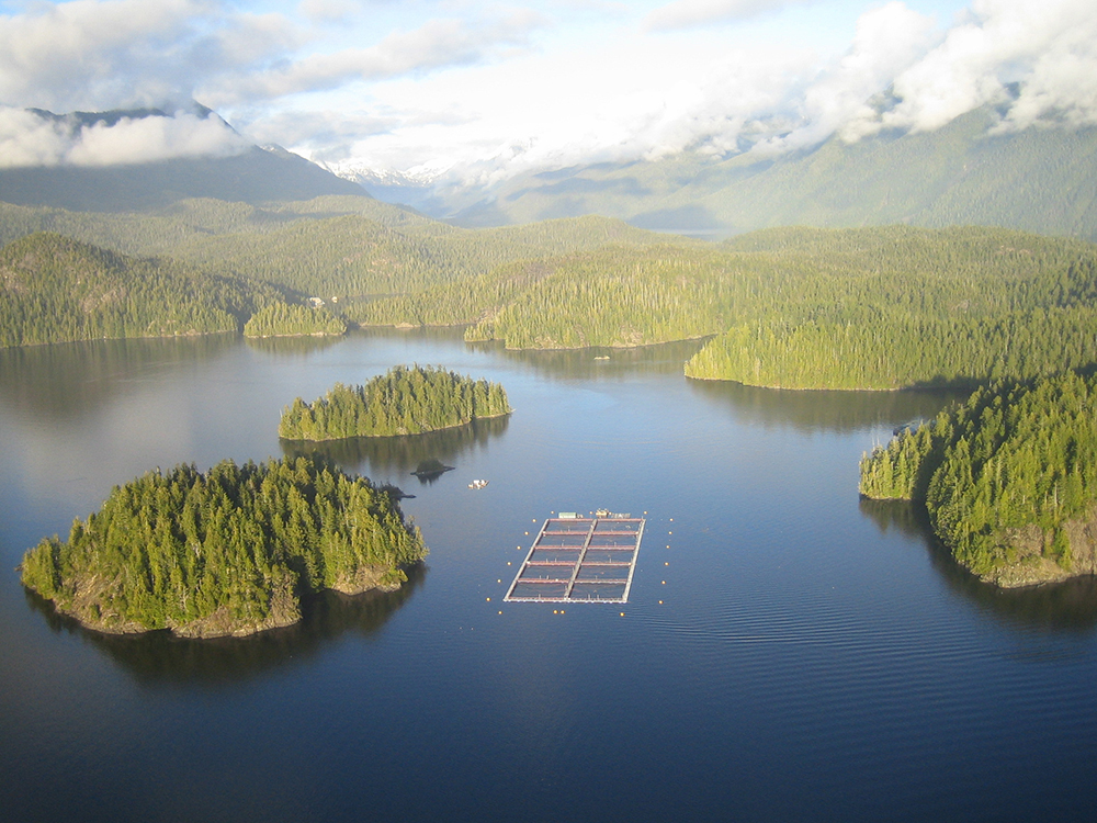 Article image for Canadian salmon farmers: 'Leave us out of your shutdown'