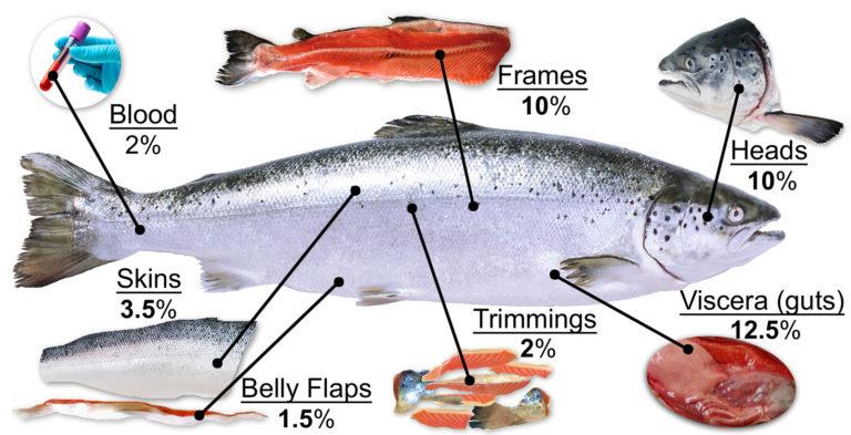 Article image for Se necesita determinación para avanzar la sostenibilidad acuícola