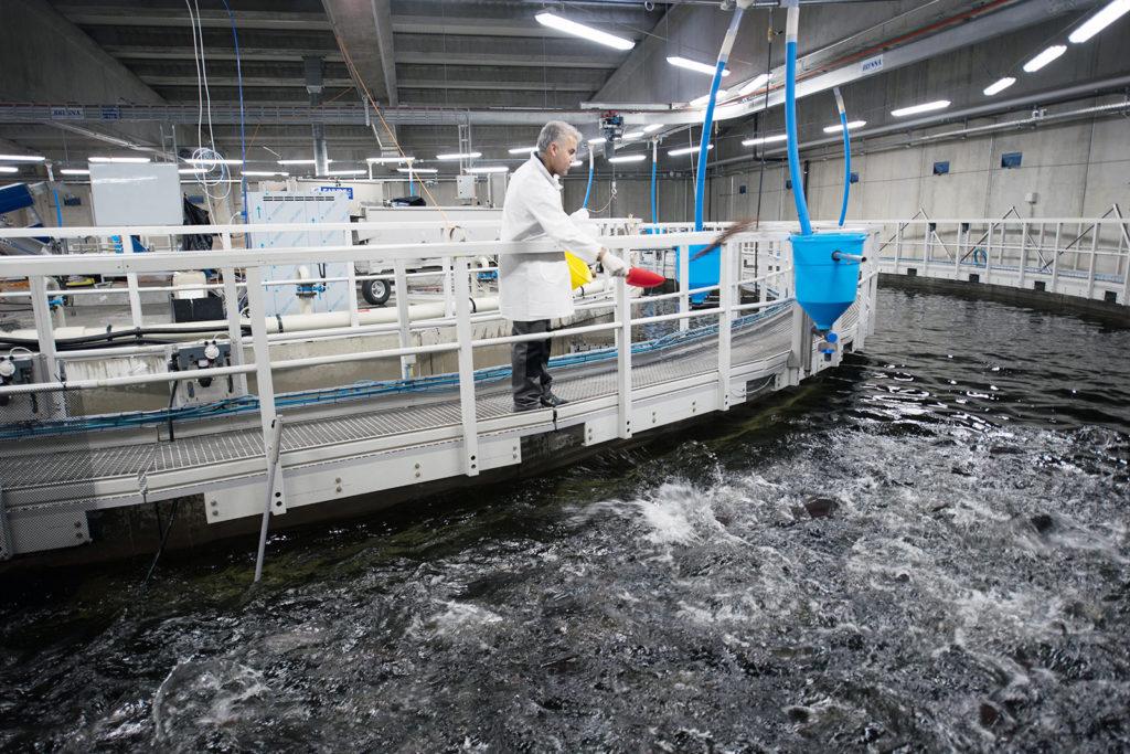 Article image for Desarrollos en tecnologías de contención cerrada para salmónidos, parte 2