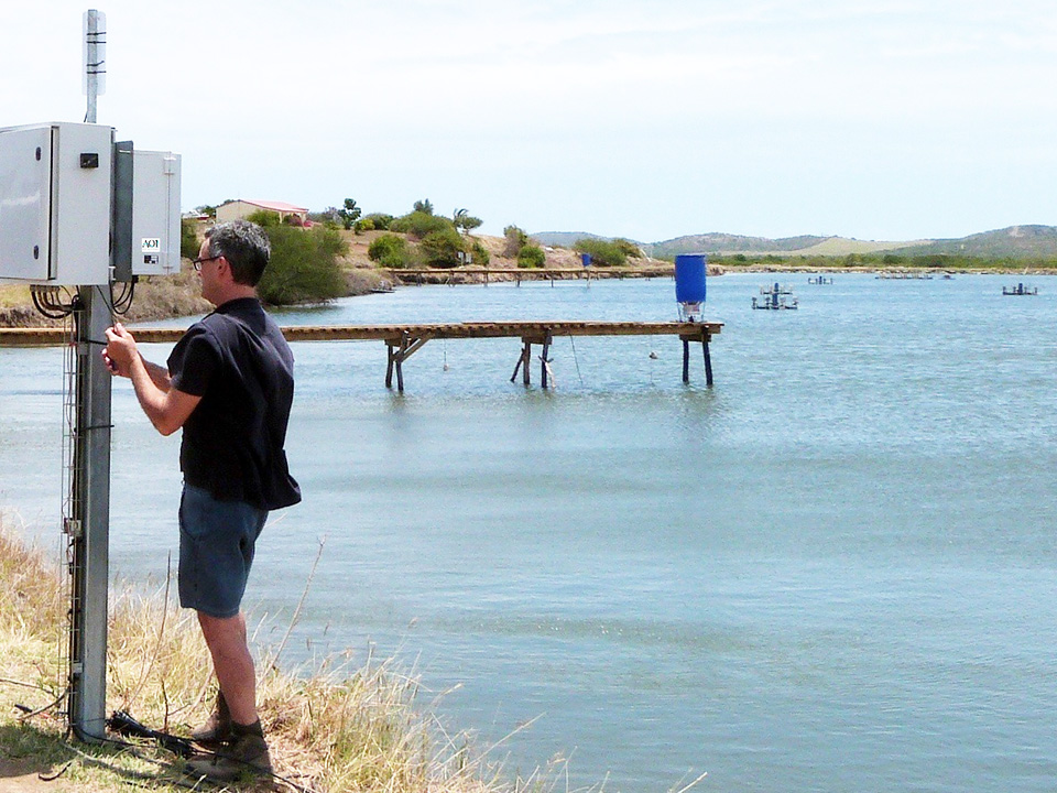 Article image for Acoustic control improves feeding productivity at shrimp farms